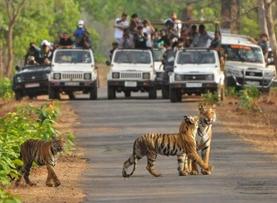 Kanha National Park in Mandla
